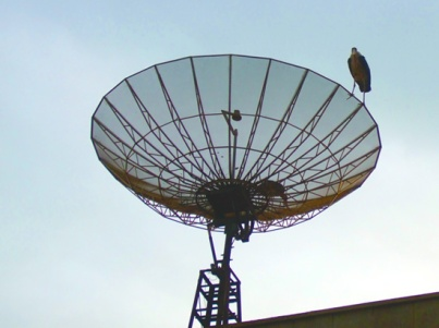 Marabou on Satellite Dish
