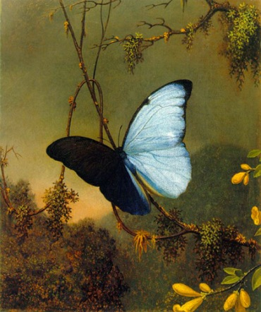 Blue Morpho Butterfly by Martin Johnson Heade, 1864.