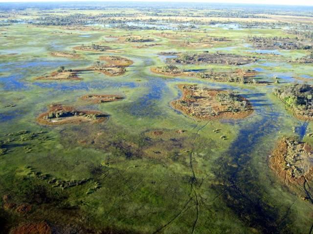 Okavango Delata