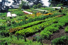 Agroecosystem approach to farming (Coeur de Chaman)