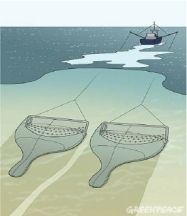 twin_beam_trawling_greenpeace_2